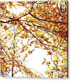 Autumn Leaves Acrylic Print by Blink Images