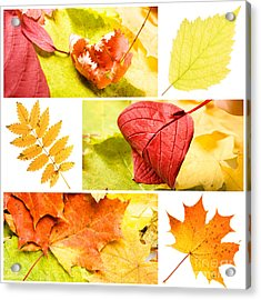 Autumn Leaves Acrylic Print by Boon Mee