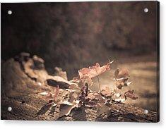 Autumn Leaves Acrylic Print by Amanda Elwell