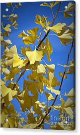 Autumn Leaves Acrylic Print by Design Windmill