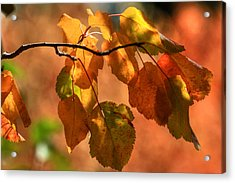 Autumn Leaves Acrylic Print by Donna Kennedy