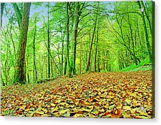 Autumn Leaves Acrylic Print by Frank Anthony Lynott
