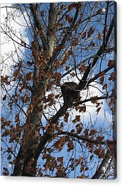 Autumn Leaves Acrylic Print by Guy Ricketts