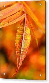 Autumn Leaves Acrylic Print by Gynt