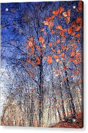 Autumn Leaves II Acrylic Print