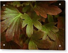 Autumn Leaves Acrylic Print by Jean OKeeffe Macro Abundance Art