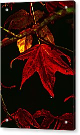 Acrylic Print featuring the photograph Autumn Leaves by Lesa Fine