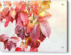 Autumn Leaves Acrylic Print by Liane Wright
