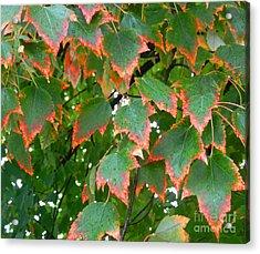 Autumn Leaves Acrylic Print by Marcia Nichols