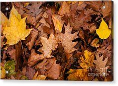 Acrylic Print featuring the photograph Autumn Leaves by Matt Malloy
