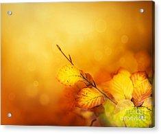 Autumn Leaves Acrylic Print by Mythja  Photography