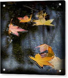 Autumn Leaves On Water Acrylic Print