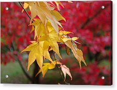 Autumn Leaves Acrylic Print by Tony Serzin