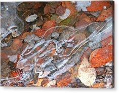 Autumn Leaves Under Ice Acrylic Print by Carolyn Reinhart