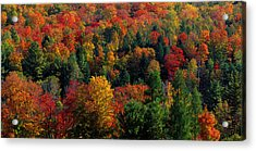 Autumn Leaves Vermont Usa Acrylic Print by Panoramic Images