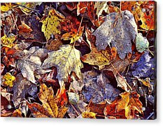 Autumn Leaves With Frost Acrylic Print