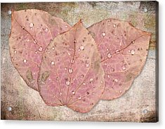 Autumn Leaves With Water Drops  Acrylic Print by Angela A Stanton