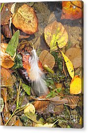 Acrylic Print featuring the photograph Autumn Leavings by Ann Horn