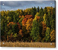 Acrylic Print featuring the photograph Autumn by Leif Sohlman