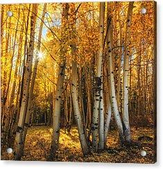 Autumn Light Acrylic Print by Rick Furmanek