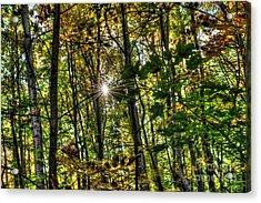 Autumn Lights  Acrylic Print by Rich Fletcher
