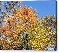 Acrylic Print featuring the photograph Autumn Limbs by Jason Williamson