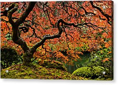 Autumn Magnificence Acrylic Print by Don Schwartz