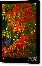 Autumn Maple Acrylic Print