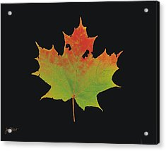 Autumn Maple Leaf 1 Acrylic Print