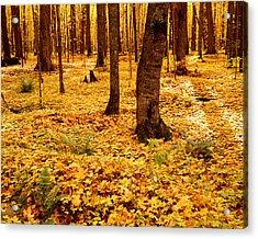 Autumn Maples Acrylic Print by Tim Hawkins