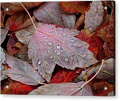 Autumn Melange Acrylic Print by Rona Black