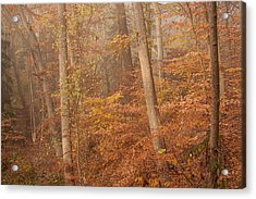 Acrylic Print featuring the photograph Autumn Mist by Patrice Zinck