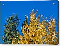 Autumn Mix 2 - Featured 3 Acrylic Print by Alexander Senin