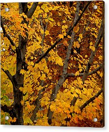 Autumn Moods 21 Acrylic Print