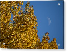 Autumn Moonrise Acrylic Print