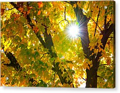 Autumn Morn Acrylic Print by Dee Dee  Whittle