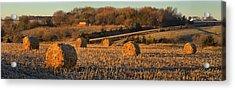 Autumn Morning Bales Acrylic Print