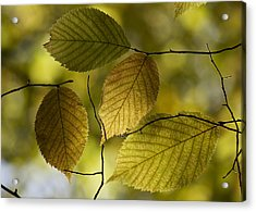 Autumn Mosaic Acrylic Print by Penny Meyers