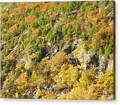 Acrylic Print featuring the photograph Autumn Mountain Side by Gene Cyr