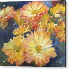 Autumn Mums Acrylic Print by Jennifer Lycke