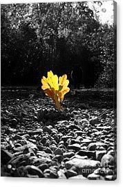 Autumn Oak Isolations Acrylic Print by Terri Waters