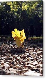 Autumn Oak Acrylic Print by Terri Waters