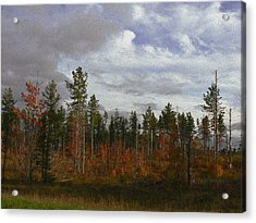 Autumn On Forest Edge Acrylic Print