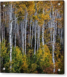 Acrylic Print featuring the photograph Autumn On Mcclure Pass by Ken Smith