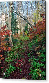 Autumn On Mount Hale Acrylic Print