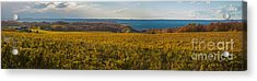 Autumn On Old Mission Peninsula Panoramic Acrylic Print