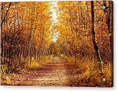 Autumn On The Harte Trail Acrylic Print by Larry Trupp