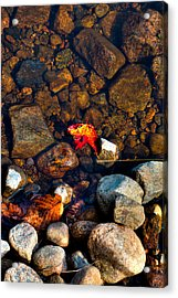 Autumn On The Shore Acrylic Print by David Patterson