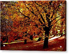 Acrylic Print featuring the photograph Autumn On Wombat Hill II by Chris Armytage