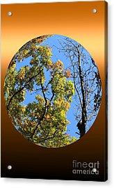 Autumn Opens Up Acrylic Print by Rick Rauzi